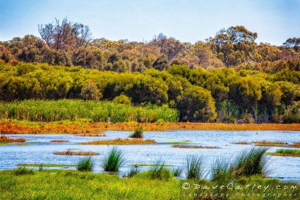 Abundant Bird Life, Yanchep National Park, Perth, Wester Australia