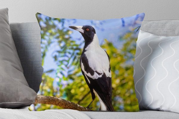 Majestic Magpie - Australian Magpie, Mindarie, Perth, Western Australia, Wildlife Cushion Cover (AMP1.4-V1-CC1)