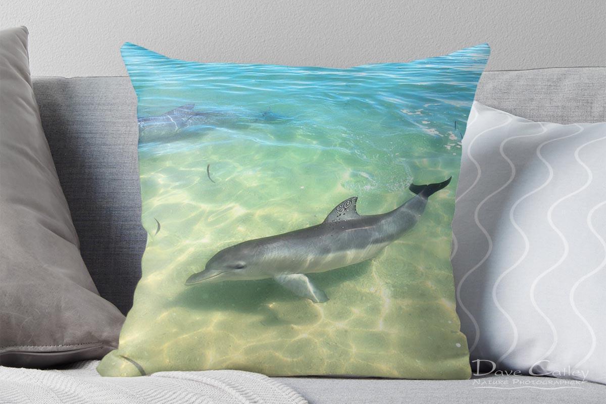 Samu - Baby Dolphin, Monkey Mia, Shark Bay, Western Australia, Wildlife Cushion Cover (CCW1.1-V1-CC1)