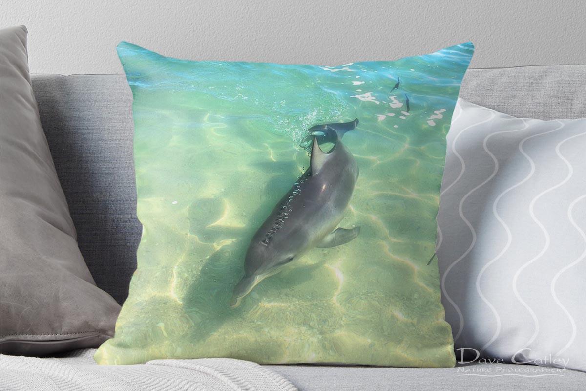 Samu - Baby Dolphin, Monkey Mia, Shark Bay, Western Australia, Wildlife Cushion Cover (CCW1.2-V1-CC1)
