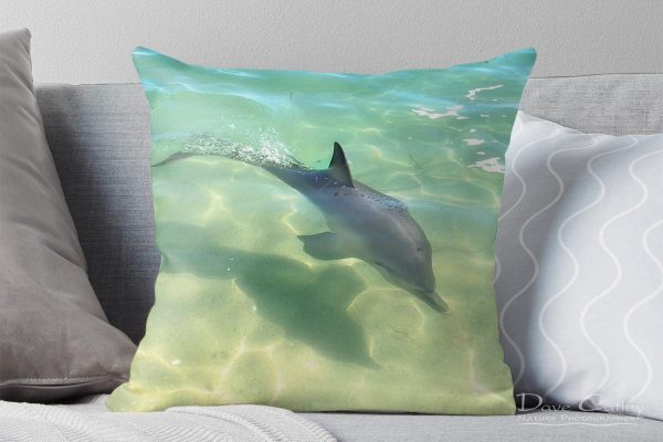 Samu - Baby Dolphin, Monkey Mia, Shark Bay, Western Australia, Wildlife Cushion Cover (CCW1.3-V1-CC1)