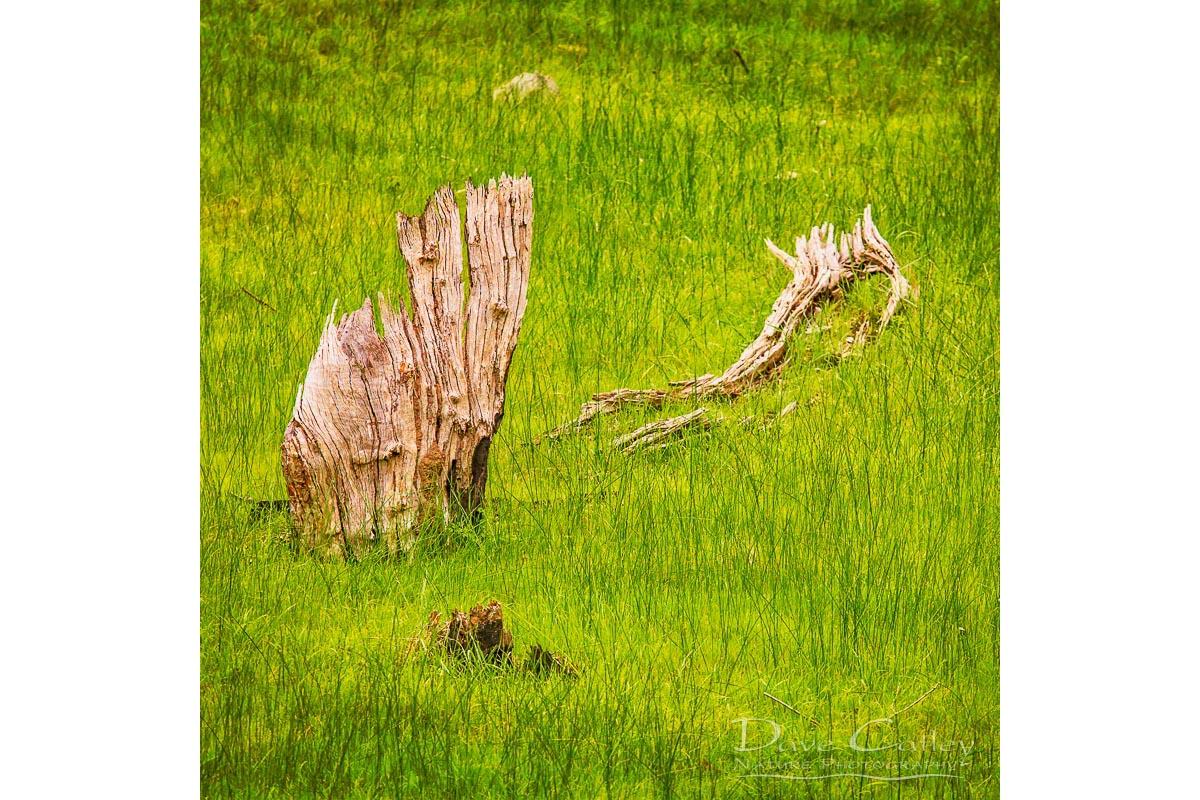 Sailing the Sea of Grass - Bells Rapids, Swan Valley, Perth, Western Australia, Landscape Cushion Cover (BRV1.1-V1-CC1)