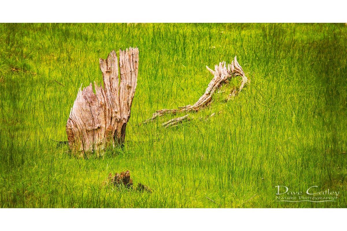 Sailing the Sea of Grass - Bells Rapids, Swan Valley, Perth, Western Australia, Landscape Stubby Holder (BRV1.1-V1-SH1)