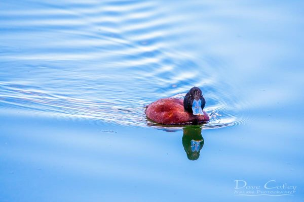 Photos – The Birds of Lake Monger Reserve