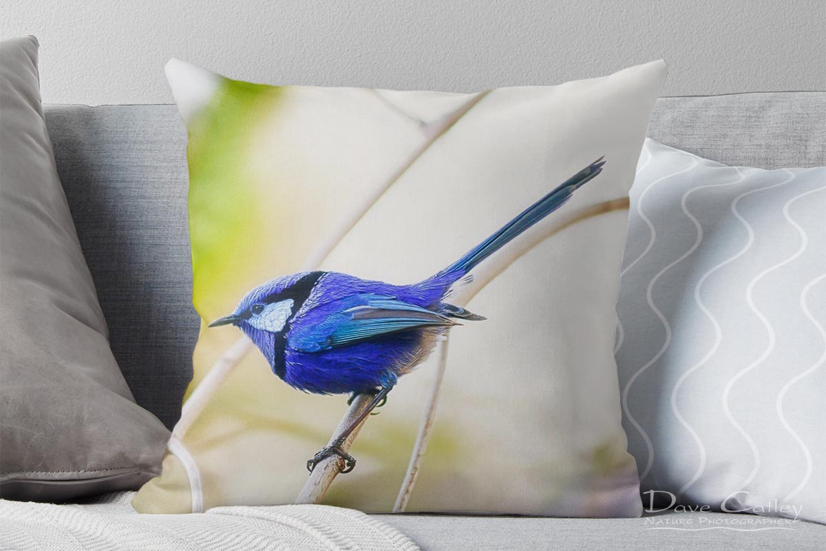 Sitting Pretty - Blue Wren, Bushy Lakes, Margaret River, Western Australia, Wildlife Cushion Cover (BWB1.1-V2-CC1)