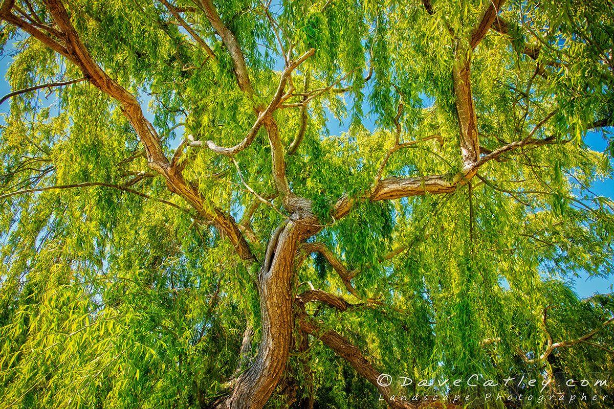 Colour of Life, Yanchep National Park, Photographic Art