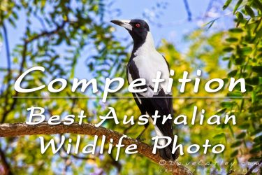 Competition – Best Australian Wildlife Photo