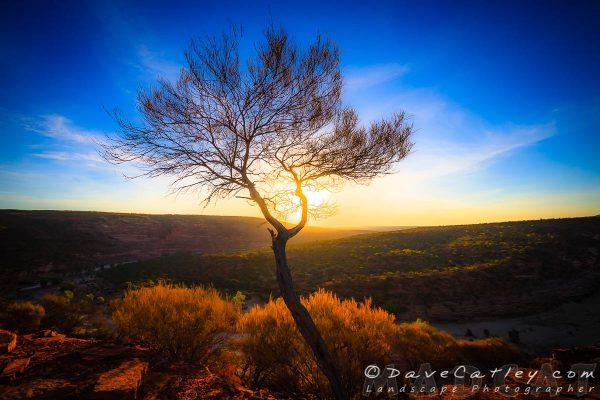 Sleeklens - Dead River Rree, Murchison River, Kalbarri, Western Australia