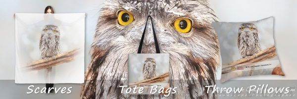 Mothers Day Gifts, Tawny Frogmouth, Native Animal Rescue, Perth, Western Australia - Photographic Art