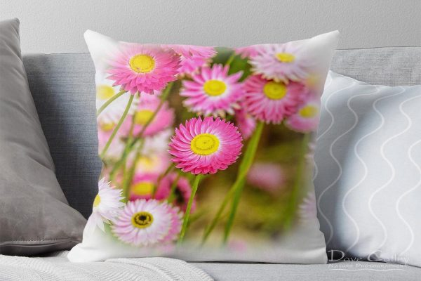 Pink Perfection - Everlasting Daisies, Kings Park, Perth, Western Australia, Flora Cushion Cover (KPF1.1-V2-CC1)