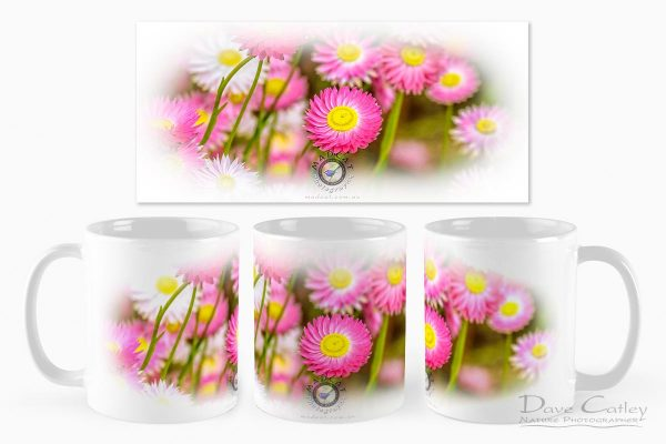 Pink Perfection - Everlasting Daisies, Kings Park, Perth, Western Australia, Flora Mug (KPF1.1-V2-MG1)