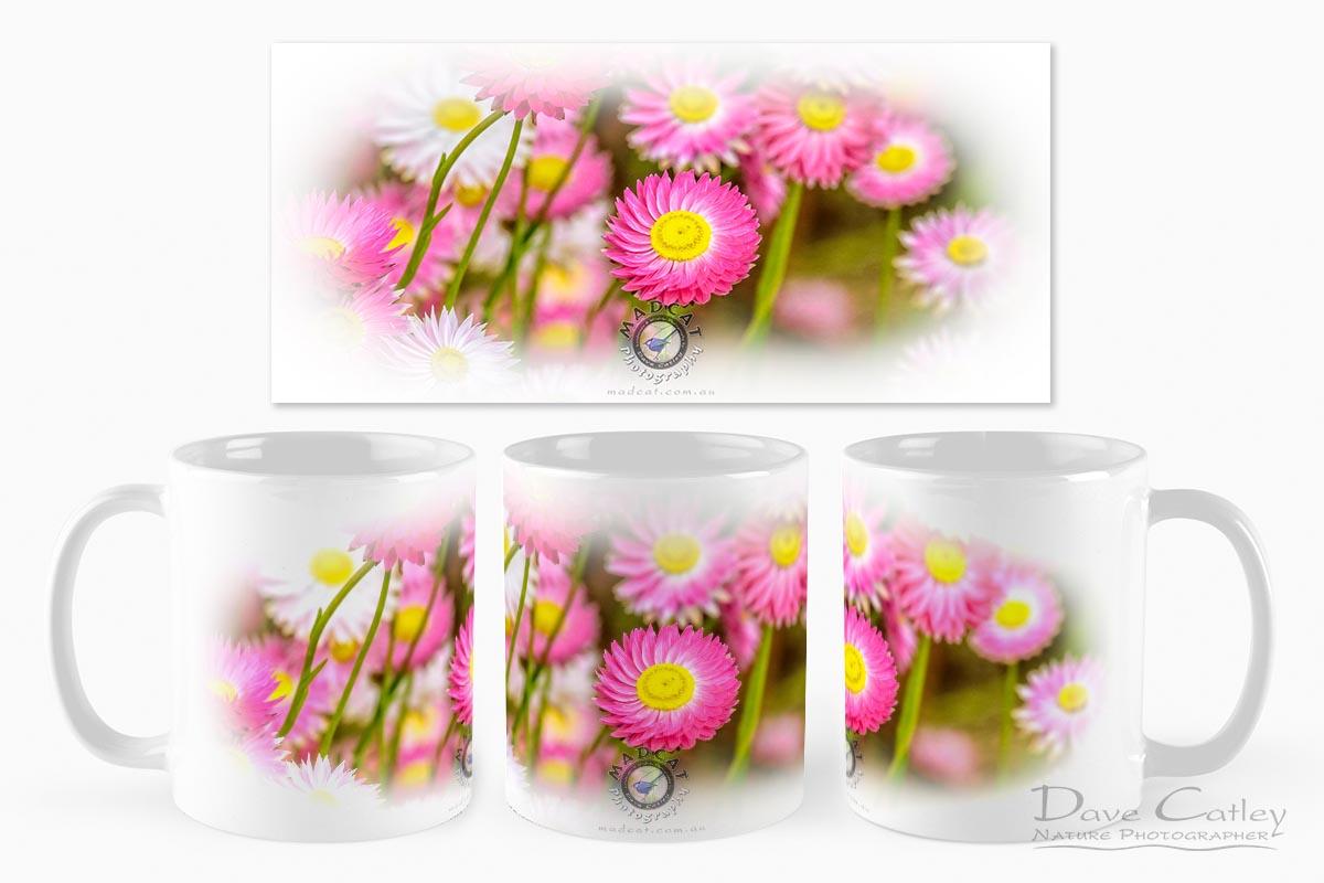 Pink Perfection - Everlasting Daisies, Kings Park, Perth, Western Australia, Flora Mug (KPF1.1-V2-MG1)