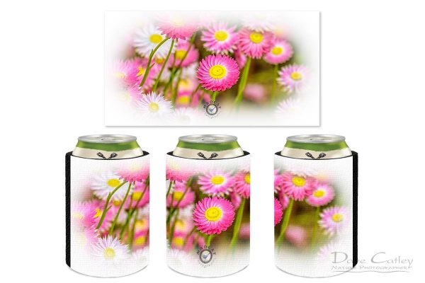 vPink Perfection - Everlasting Daisies, Kings Park, Perth, Western Australia, Flora Stubby Holder (KPF1.1-V2-SH1)