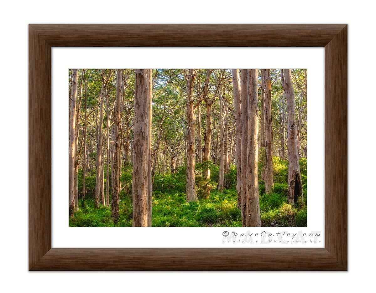 Forest Twilight 1, Boranup Forest, Margaret River, Western Australia - Frame 20x60 (BFV1.1-V3-TH1)