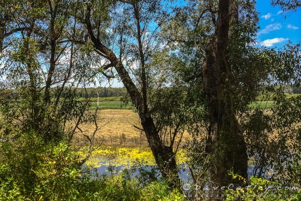 Ghost House Walk Trail, Yanchep National Park, Perth, Western Australia - Photographic Art