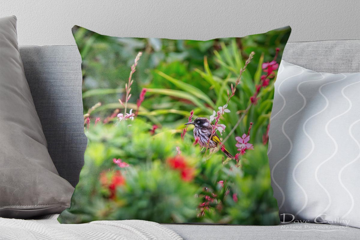 New Holland Honeyeater - Honeyeater, Bushy Lakes, Margaret River, Western Australia, Wildlife Cushion Cover (MRB1.1-V1-ON1-CC1)