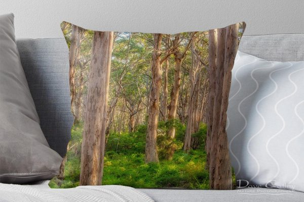 Forest Twilight 1 - Karri Trees, Boranup Forest, Margaret River, Western Australia, Landscape Cushion Cover (BFV1.1-V4-CC1)