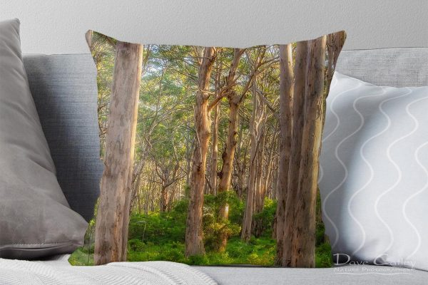 Forest Twilight 2 - Karri Trees, Boranup Forest, Margaret River, Western Australia, Landscape Cushion Cover (BFV1.2-V3-CC1)