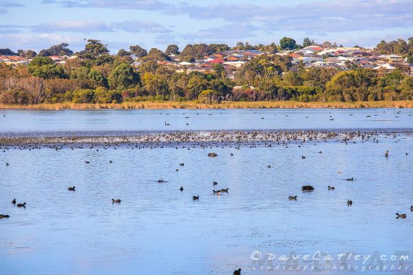 Lake Joondalup, Joondalup, Perth, Western Australia - Photographic Art