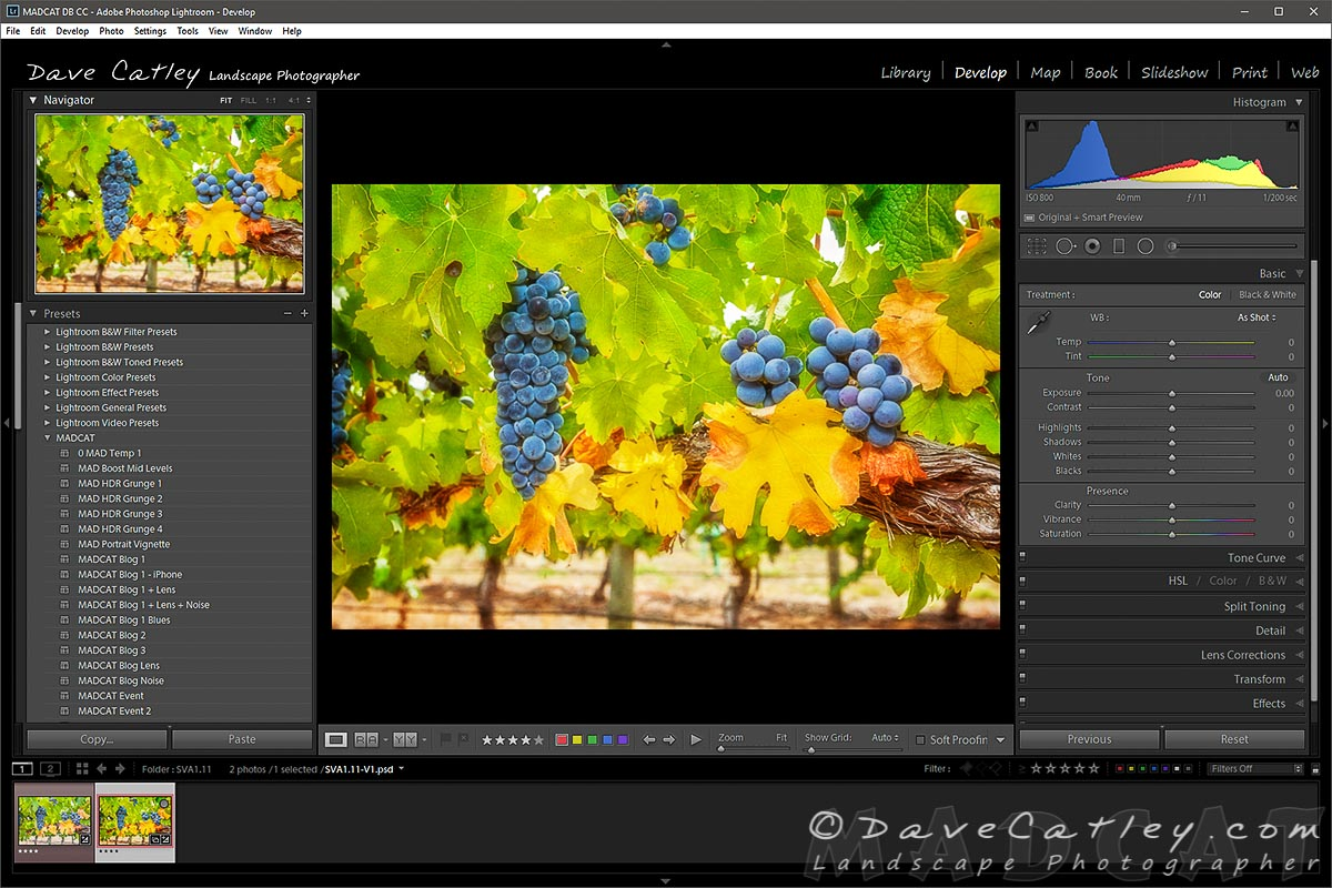 Lightroom Screenshot - Grapess on the Vine, Upper Reach Winery, Swan Valley - Western Australian Landscape Photography