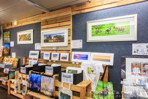 MADCAT Photography Gallery, Wanneroo Markets, Perth, Western Australia