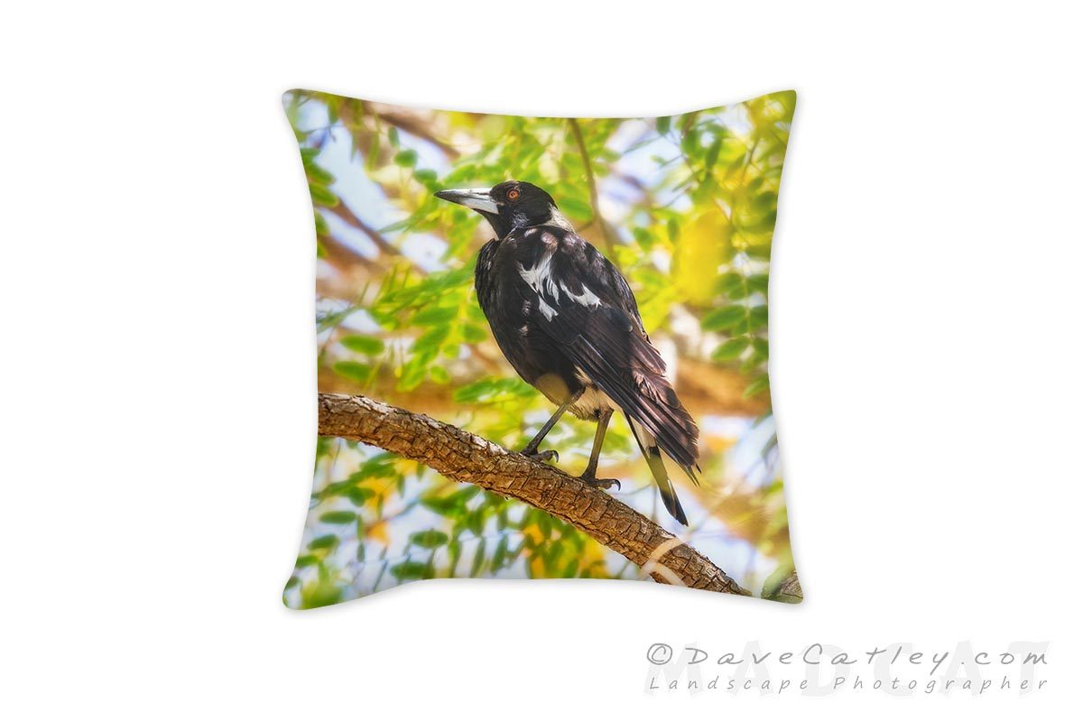 Maggies Magpies 1, Mindarie, Perth, Western Australia, Cushion Covers (WBL1.8-V1-CC1)