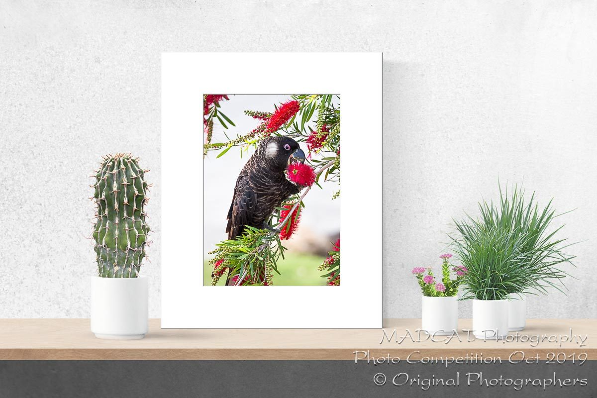 Matted Prints - Photo Competition, MADCAT Photography, Perth, Western Australia