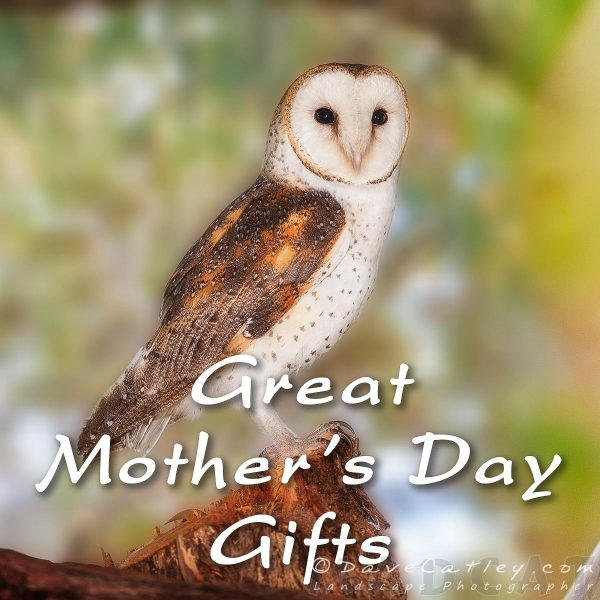 Mothers Day Gifts, Barn Owl, Native Animal Rescue, Perth, Western Australia - Photographic Art