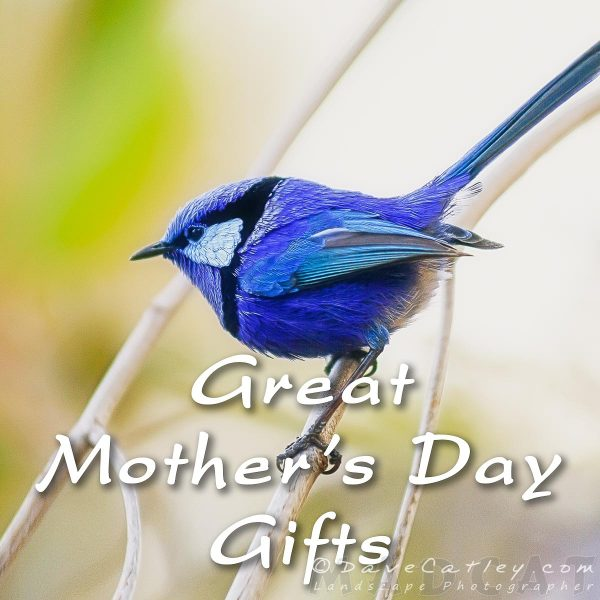 Mothers Day Gifts, Blue Wren, Margaret River, Western Australia - Photographic Art