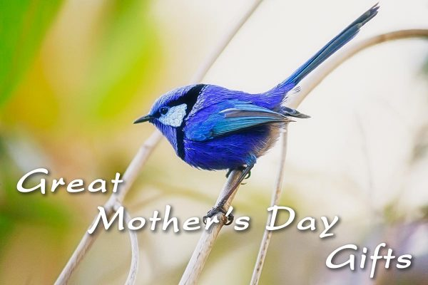Make Mother's Day a Natural Experience!