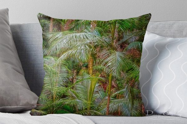 Deep in the Forest - Rainforest, Tamborine Mountain, Tamborine, Queensland, Landscape Cushion Cover (GCR1.1-V1-CC1)