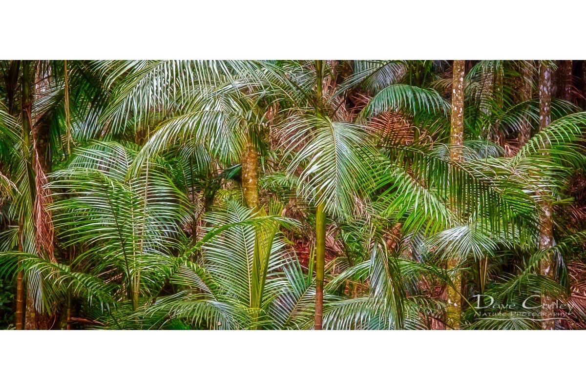 Deep in the Forest - Rainforest, Tamborine Mountain, Tamborine, Queensland, Landscape Mug (GCR1.1-V1-MG1)
