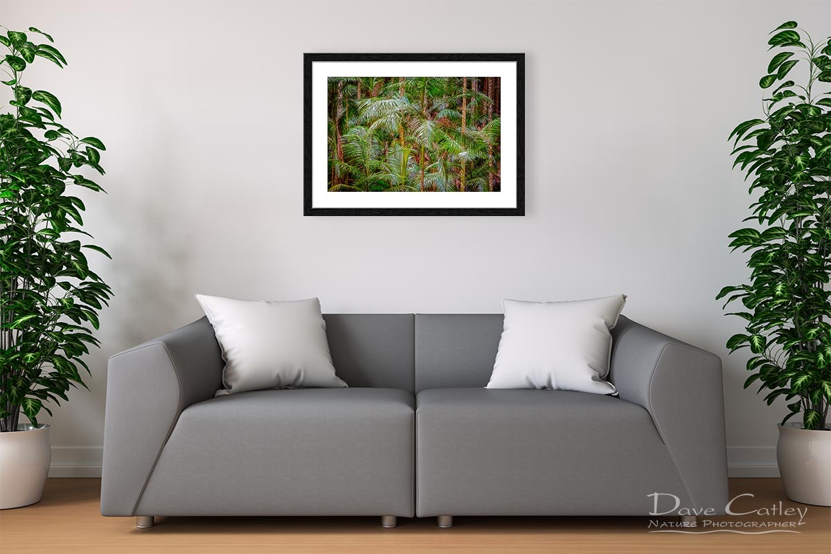 Deep in the Forest - Rainforest, Tamborine Mountain, Tamborine, Queensland, Landscape Print (GCR1.1-V1-TH1)
