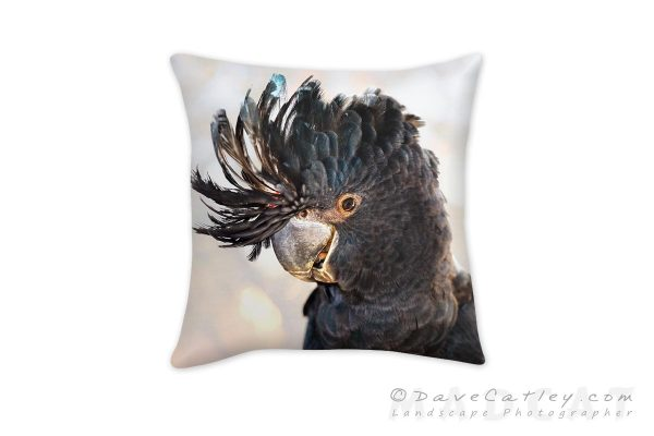 Red-Tailed Black Cockatoo, Native Animal Rescue, Perth, Western Australia, Cushion Covers (NAR1.11-V1-CC1)