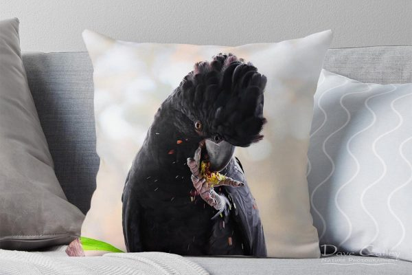 Exploding Nuts - Red Tailed Black Cockatoo, Native Animal Rescue, Perth, Western Australia, Wildlife Cushion Cover (NAR1.17-V1-CC1)