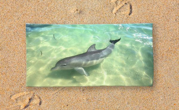 Beach Towel - Samu the Dolpin from Monkey Mia, Shark Bay