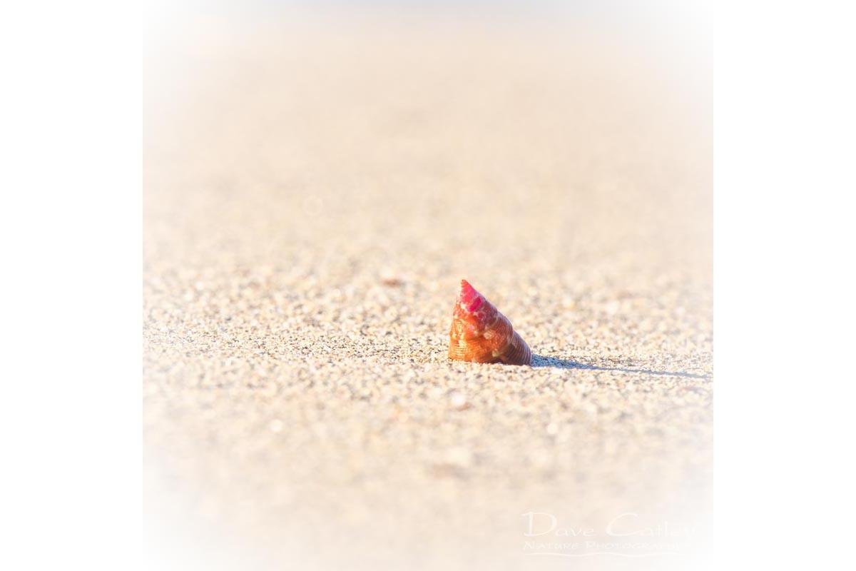 Simplicity - Sea Snail Shell, Carnac Island, Perth, Western Australia, Wildlife Cushion Cover (CIS1.1-V1-CC1)