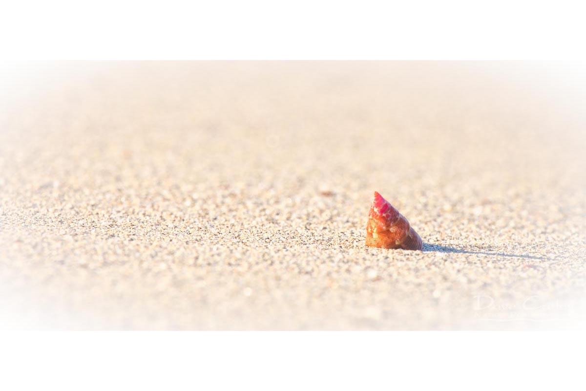 Simplicity - Sea Snail Shell, Carnac Island, Perth, Western Australia, Wildlife Mug (CIS1.1-V1-MG1)