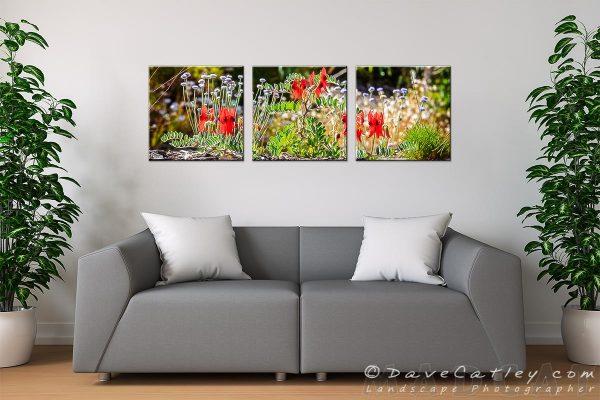 Sturt's Desert Peas, Kings Park, Perth, Western Australia – Living Room Triptych