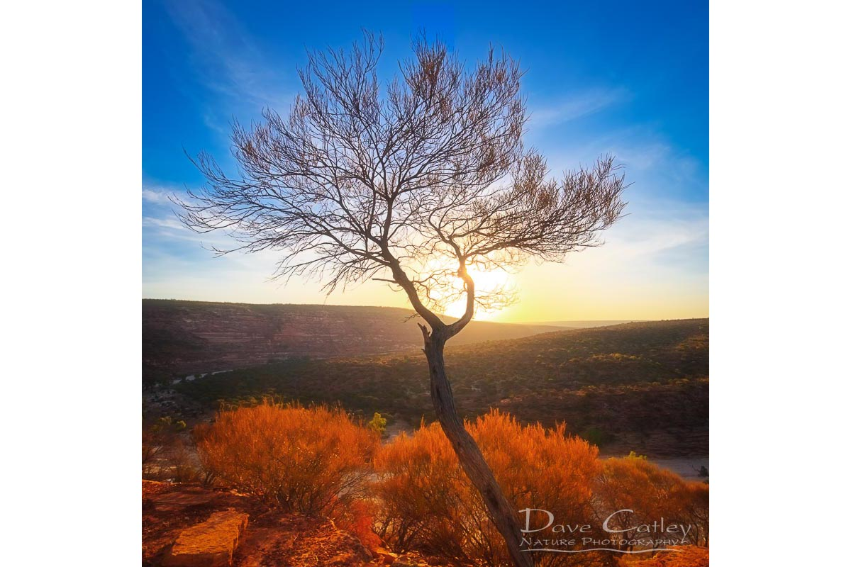 Dead River Tree - Sunset, Murchison River, Kalbarri, Western Australia, Landscape Cushion Cover (KNP1.1-V1-CC1)