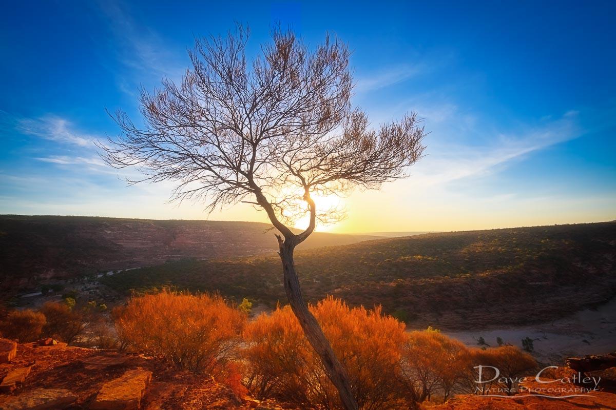 Dead River Tree - Sunset, Murchison River, Kalbarri, Western Australia, Landscape Print (KNP1.1-V1-TH1)