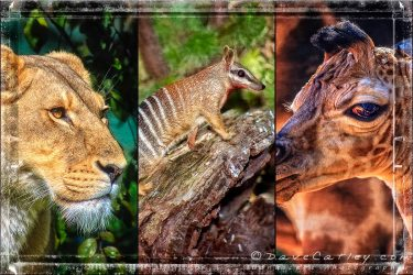 Perth Zoo Photo Art