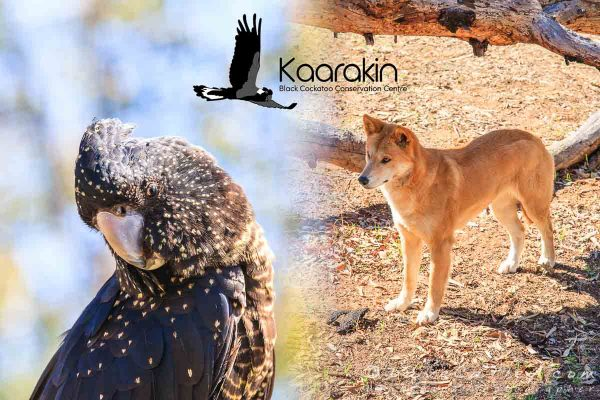 Photo Tour – Kaarakin Black Cockatoo Conservation Centre