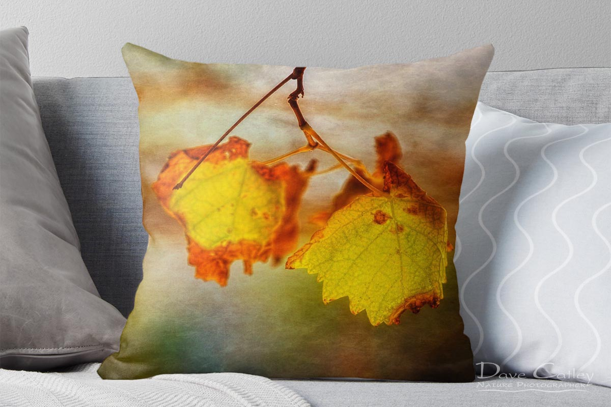 Autumn Vines 1 - Vine Leaves, Mindarie, Perth, Western Australia, Flora Cushion Cover (CVA1.1-V1-CC1)