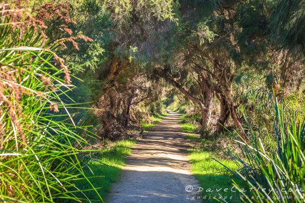 Wetlands Walk Trail, Yanchep National Park, Perth, Western Australia - Photographic Art