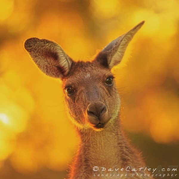 What's Up, Yanchep National Park, Perth, Western Australia - Photographic Art